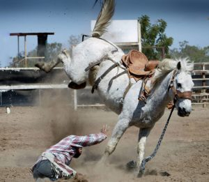 accident-action-animal-33251-